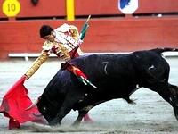Испанский матадор в бою одержал победу над шестью быками