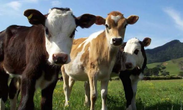 Россельхознадзор грозит запретом на поставки мясомолочной продукции из Беларуси