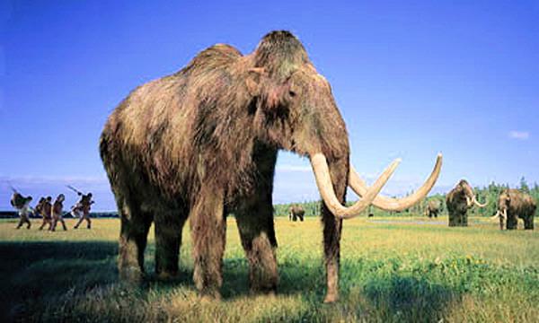 Ученые хотят заселить планету стадами мамонтов