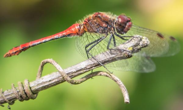22 мая отмечается Международный день биологического разнообразия